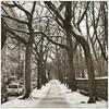 A winter walk along Central Park