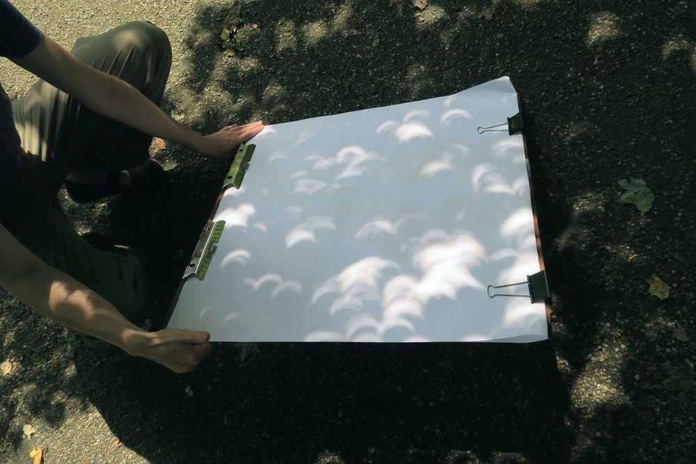 Tree leaves (Acer rubrum) serving as pinhle projector during 2017 Solar Eclipse, NYBG, Bronx, NY
