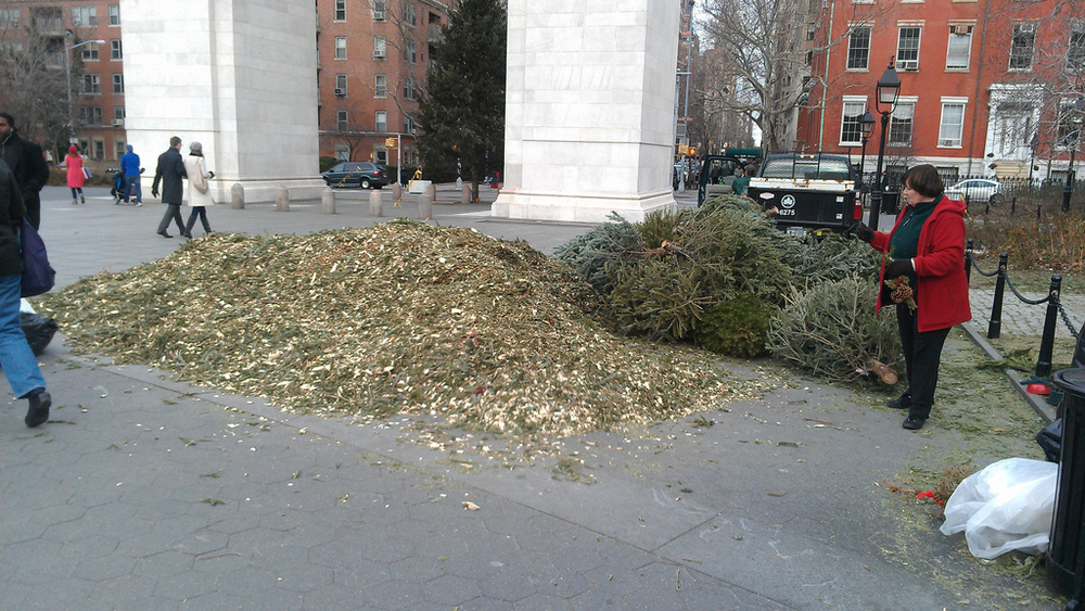 See ya next year, trees! Mulchfest in Washington Square Park